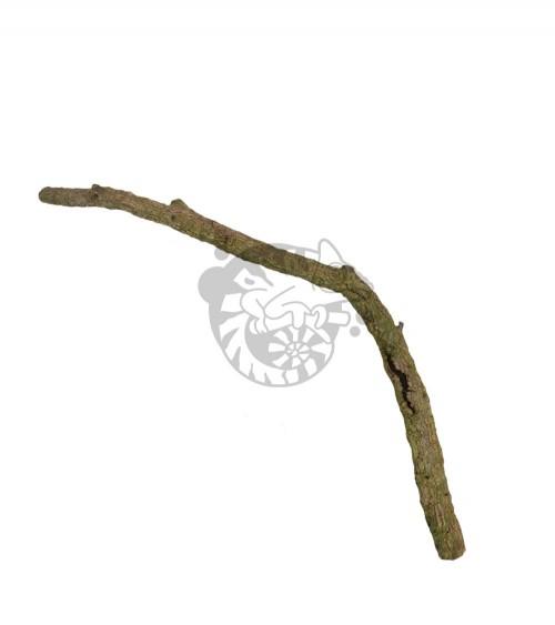 Naturalna gałąź dębu korkowego do terrarium