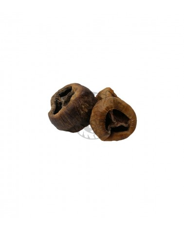Talami naturalne 8-10 cm - ozdoba do terrarium