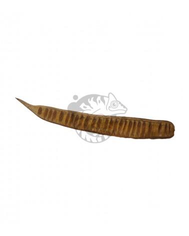 Fasola egzotyczna 30-45 cm do Terrarium