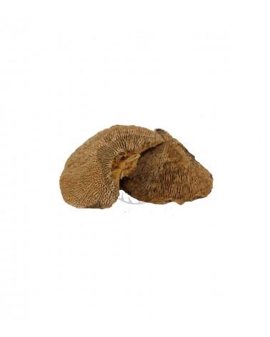 Suszony Grzyb Naturalny SPONGE 7-10 cm