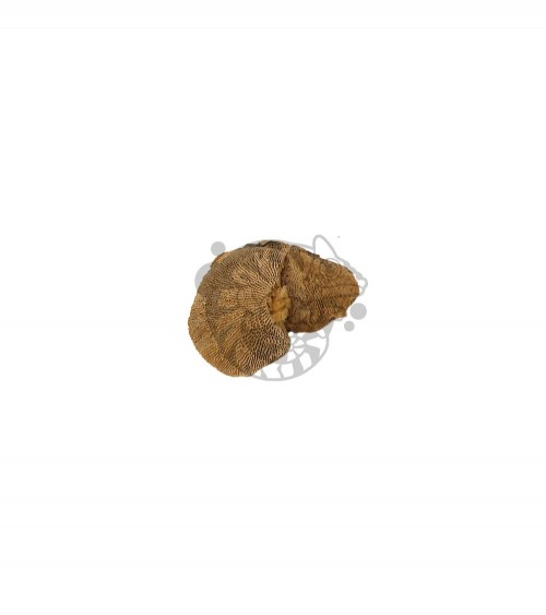 Suszony Grzyb Naturalny SPONGE 7-10 cm do Terrarium