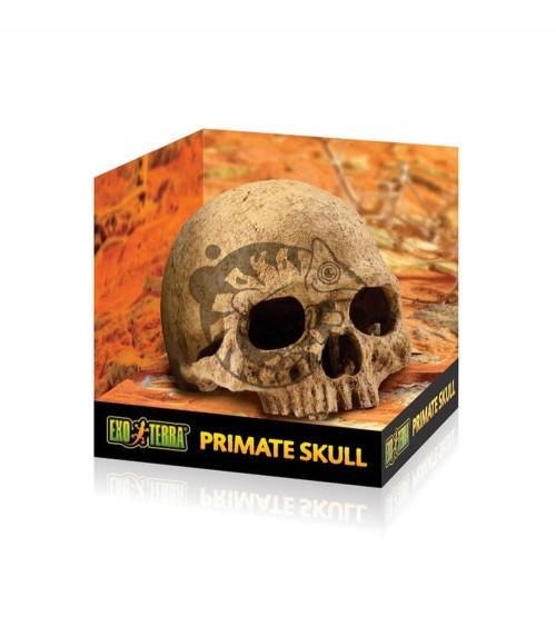 Exo Terra Primate Skull - Kryjówka Czaszka Naczelnego