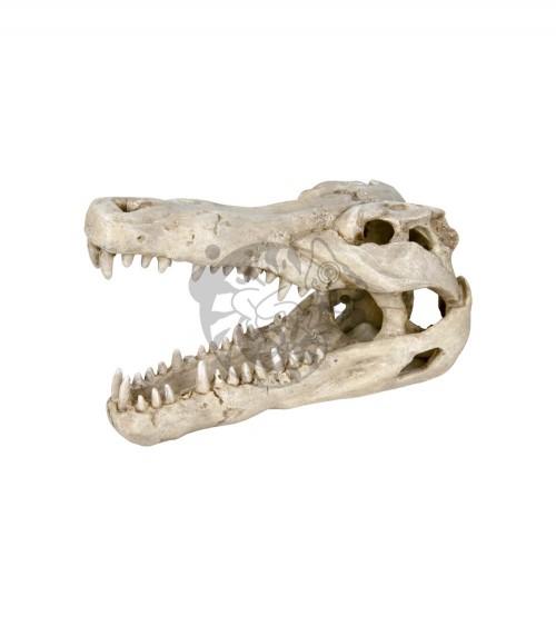 Czaszka krokodyla 14 cm TRIXIE